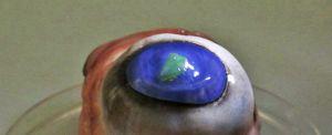 b_300_0_16777215_00_https___hypescience.com_wp-content_uploads_2018_05_lente-com-laser-olhos-de-boi.jpg