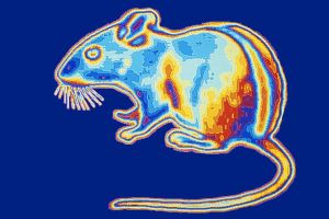 b_300_0_16777215_00_https___hypescience.com_wp-content_uploads_2019_03_visao-noturna-nanoparticulas-ratos2-838x559.jpg