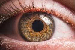 No Dia Nacional de Combate ao Colesterol, oftalmologista alerta para danos à visão