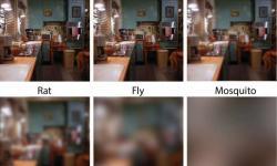 Como diferentes espécies enxergam: a acuidade visual no reino animal