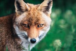 Olhos de raposa: procedimento estético demanda atenção e cuidado
